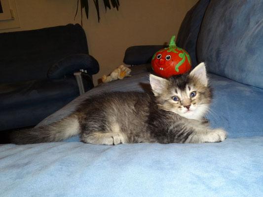 6 Wochen alt, 18.10.2012