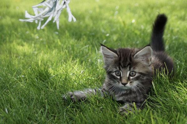 er spielt gerne draussen im Gras