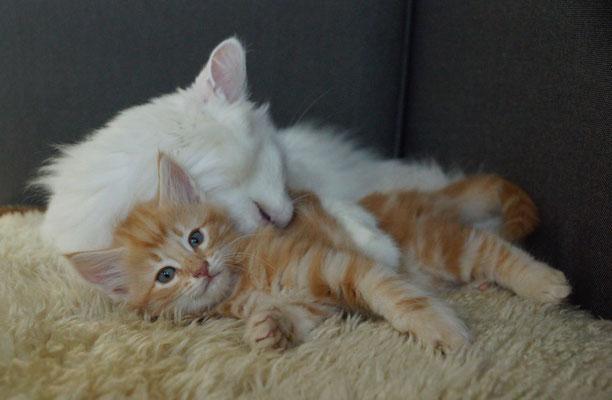 Flöckli macht die Katzenwäsche...15.12.17