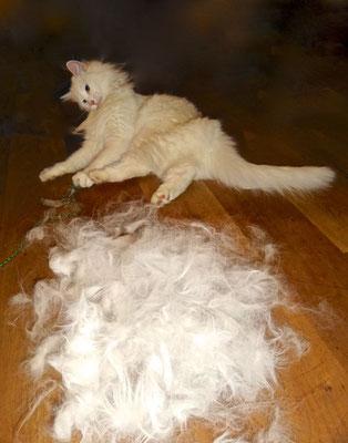ups, mehr Haare als Katze… 6. April 2014