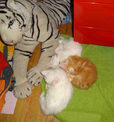 sie fanden den grossen Tiger... 28.11.17