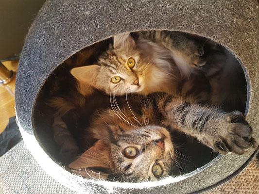die beiden Schwestern kuscheln gerne zusammen
