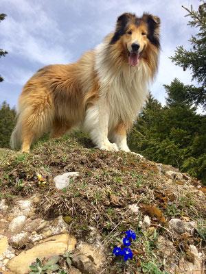9.5 Jahre alt beim Wandern
