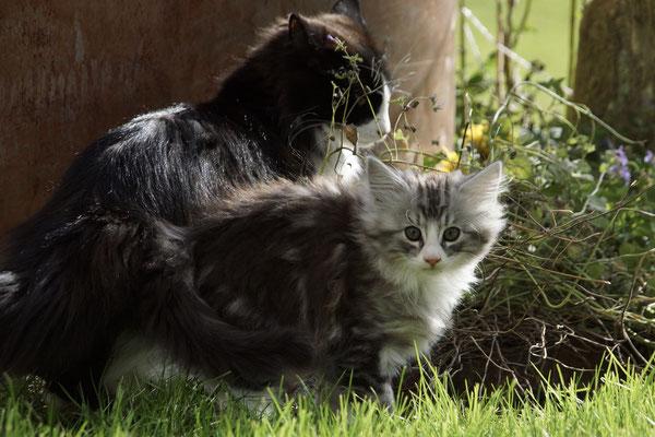 Mama gönnt sich etwas Katzenminze