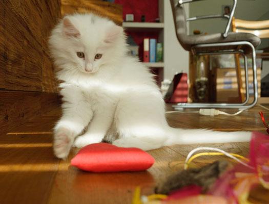 die Familie am Basteln - das Paradies für kleine Katzen... 20.11.16
