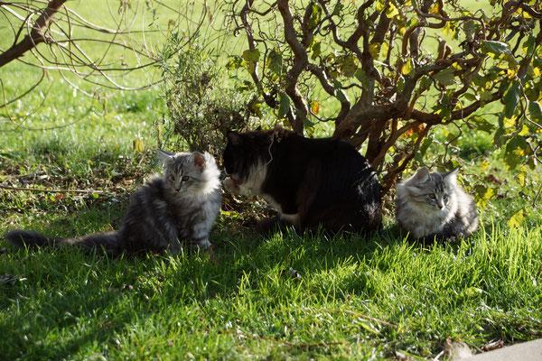 Links Gizmo, Mitte Mama Eyla und rechts Grace