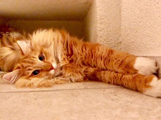 Der Sunnyboy ist 1 Jahr und 4 Monate alt
