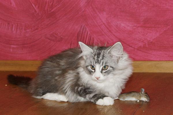 Eyla hat die Maus gebracht, sie hat mit ihr gespielt, Gizmo hat sie gefressen...