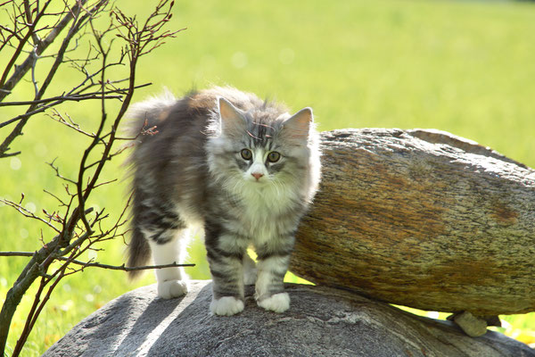 vorsichtshalber mal einen Katzenbuckel machen - man weiss ja nie...