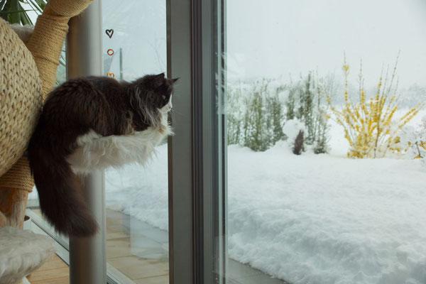 4.4.19, das Schneetreiben beobachtet sie lieber von drinnen...