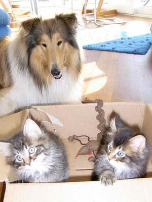Kätzchen erziehen