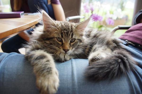 auf dem Schoss vom Besuch eingeschlafen :o)