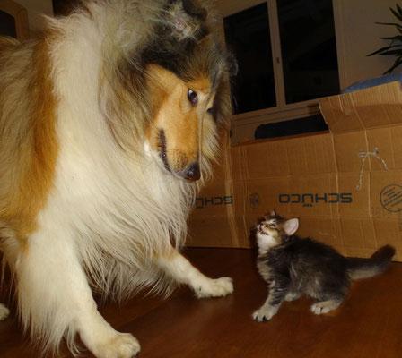 Er fand den Weg über die Abschrankung, nun muss er sich auch mit grossen Tieren herumschlagen... 18.10.2012