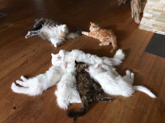 Dusty, Dempsey, Djamila und Djordy - dahinter Alisa und Dingo