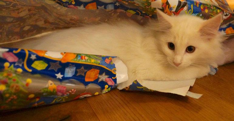 Weihnachten! Geschenke für uns, Papier für Calaya - welch ein Spass!