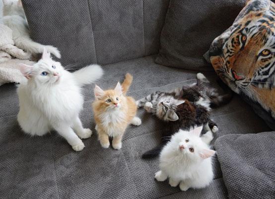 Cilla hinten am Abhauen... Flöckli, Caspar, Caruso, Candy und Calaya, 9.5 Wochen alt