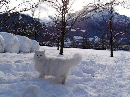 Schnee gefällt ihr! Februar 15
