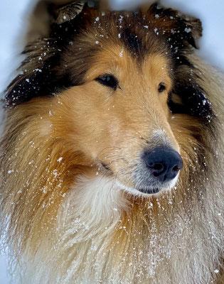 Anfang März 21, nocheinmal Schneegestöber auf der Sittlisalp