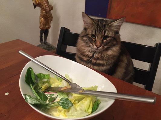 ja, ja, ich weiss... ich bleibe auf dem Stuhl, Salat mag ich eh nicht..