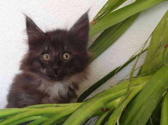 arme Yucca-Palme, sie freut sich auf den Auszug der Kätzchen...