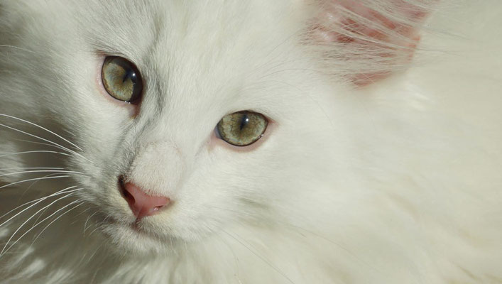 und diese wunderschönen Augen!!!
