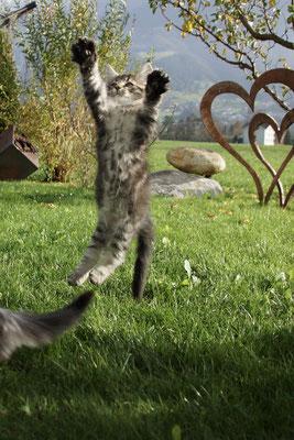 - und jump!!!