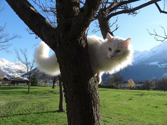 Na, wer folgt mir auf den Baum? 27.11.13
