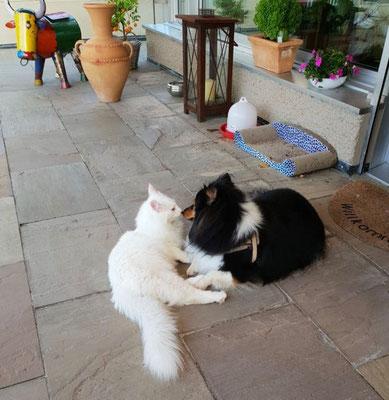Am Näsele mit seiner Freundin, der Sheltie-Hündin Kate