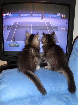 Go Roger! Aber am Ende hat auch das nichts genutzt - Djokovic war stärker...