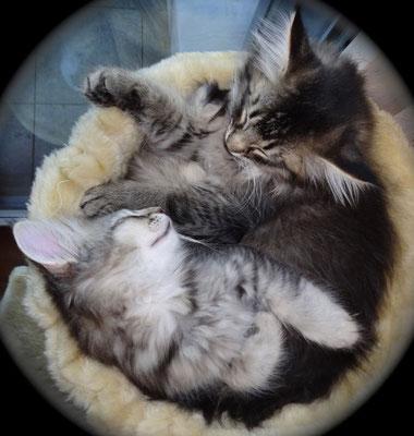 10 Wochen alt kuscheln die beiden Brüder zusammen. 16.11.2012