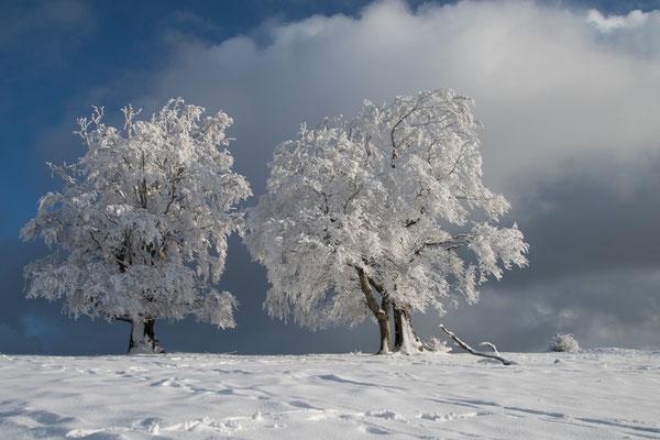 Winterzauber auf der Froburg