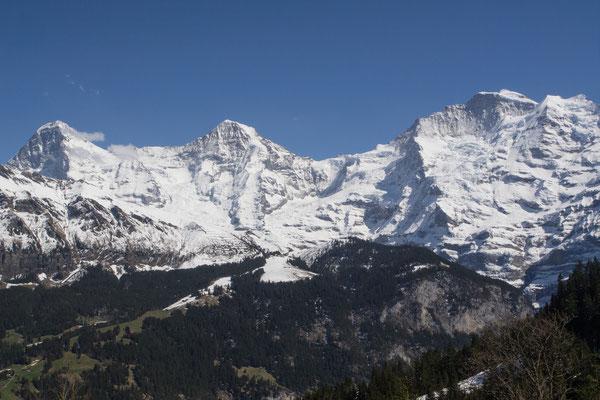 Eiger, Mönch & Jungfrau (von der Grütschalp aus gesehen) Bild Nr. P4297417-4