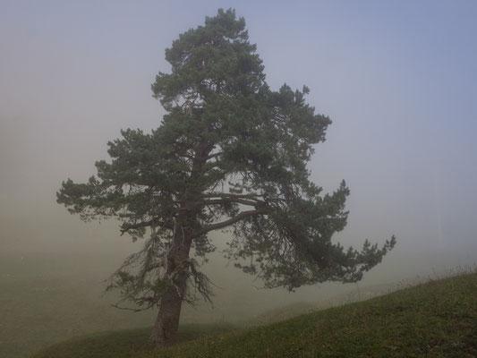 Nebel auf dem Weissenstein