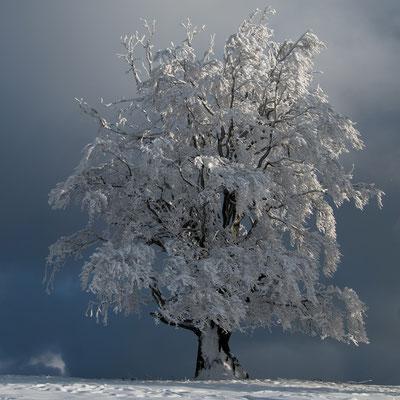Winterzauber II / Froburg