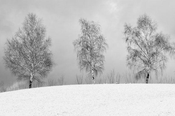 Birken  / Bad Ramsach