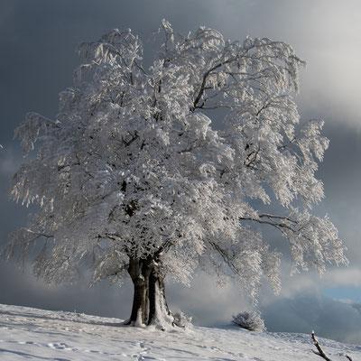 Winterzauber 4 / Froburg