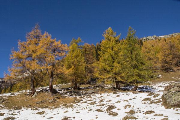 Herbst auf der Fafleralp