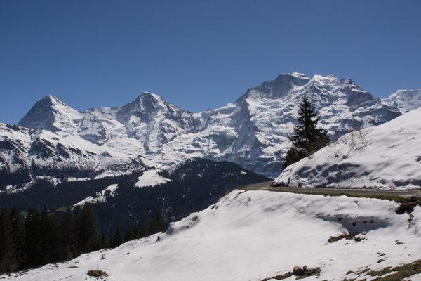 Eiger, Mönch und Jungfrau / Bild Nr. P4297353