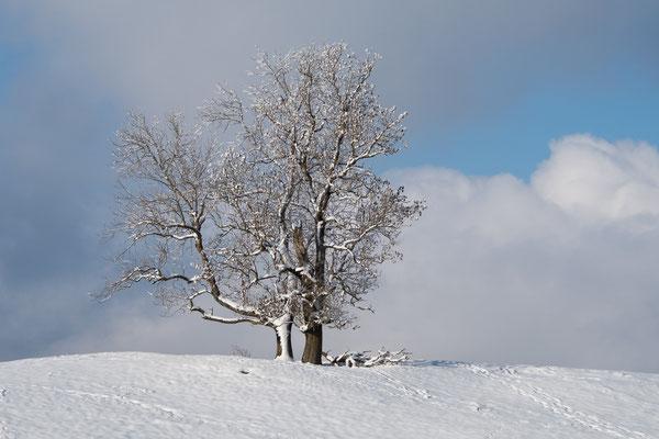 Winterzauber III  /  Froburg