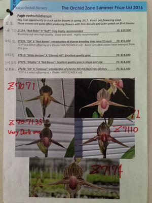 roths.の開花例がどのシブリングのものかOrchid Zoneへ問合せましたご参照ください