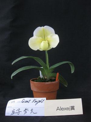 Popow Orchid賞