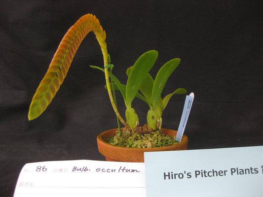 Hiro's Pither Plants賞