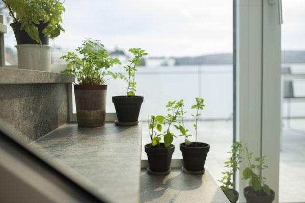Fliesenlegerfachbetrieb Fliesenfachgeschäft Matthias Raisch - Penthouse in Stuttgart - Tradition trifft Innovation mit edlem Feinsteinzeug von Raisch. Gartenkräuter auf der Treppe