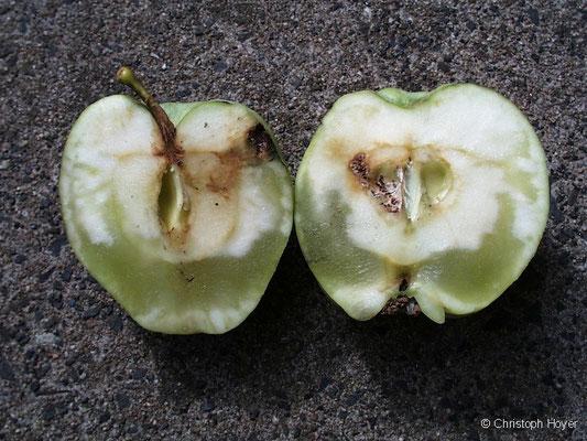 Glasigkeit an Apfel