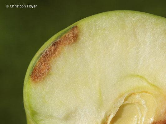 Stippe an Apfel
