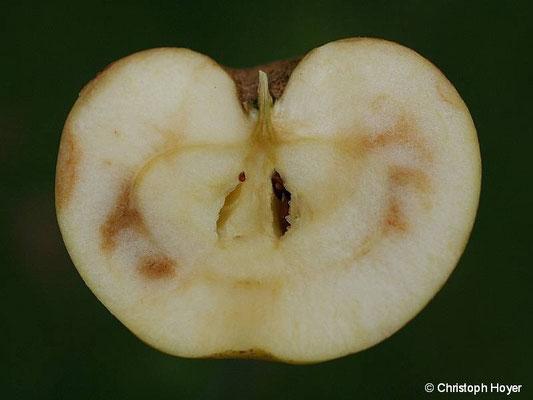 Fleischbräune an Apfel