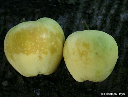 Glasigkeit - Apfel