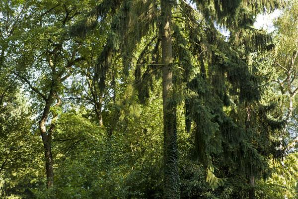 """Embassy of Trees"" © Ellen Bornkessel"