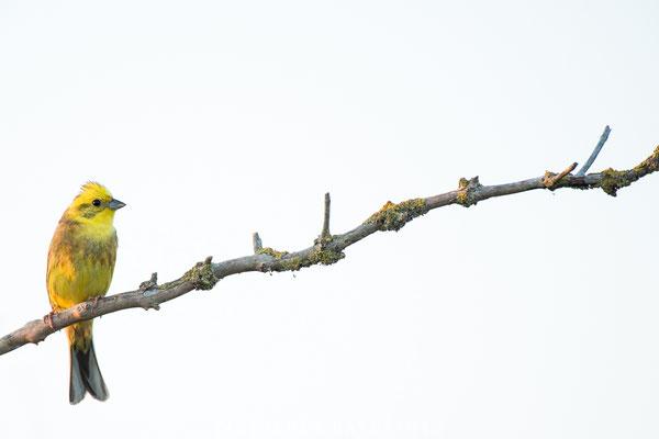 Vögel-13