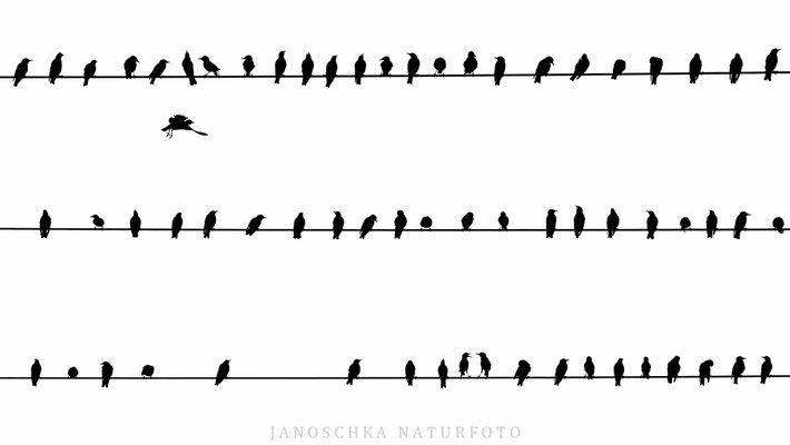 Vögel-14